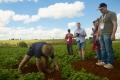 Growers for AUS VEG