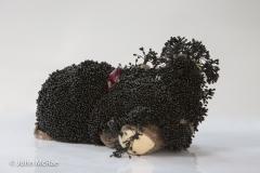 HoneyFungus-_27A2027-Edit